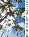 Palm trees and blue sky perming Hawaii landscape stock Photos-photolibrary 62505315