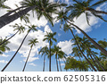 Palm trees and blue sky perming Hawaii landscape stock Photos-photolibrary 62505316