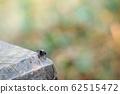 微距下的小蜘蛛 62515472