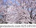 東京櫻花Tojinjin公園 62516530