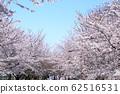 東京櫻花Tojinjin公園 62516531
