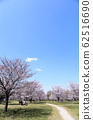 東京櫻花Tojinjin公園 62516690