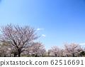 東京櫻花Tojinjin公園 62516691