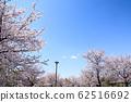 東京櫻花Tojinjin公園 62516692
