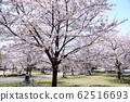 東京櫻花Tojinjin公園 62516693