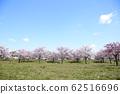 東京櫻花Tojinjin公園 62516696