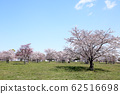 東京櫻花Tojinjin公園 62516698