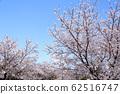 東京櫻花Tojinjin公園 62516747