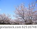 東京櫻花Tojinjin公園 62516748