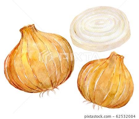 水彩插圖食品食品洋蔥 62532084