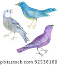 Watercolor collection of birds 62536169
