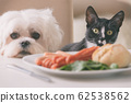 Cute dog and cat asking for food 62538562