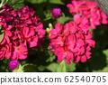 紅色的花 62540705