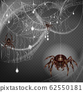 Web with frightening spiders 3d realistic 62550181