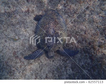 在小琉球龙虾洞水下五公尺邂逅的庞然大物 62557113