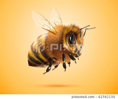 Fluffy honey bee 62562130
