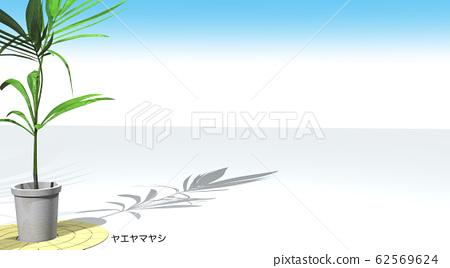 Yaeyamayashi Background Background Copy Space 62569624