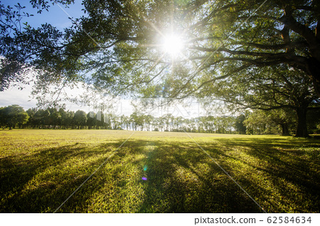 Green field,trees,blue sky and sun 62584634