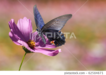 butter on the flower with nice background 62584671