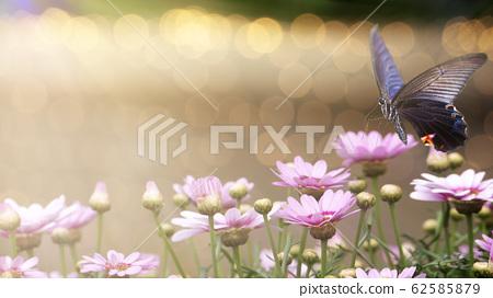 beautiful butterfly on a flower witn nice 62585879