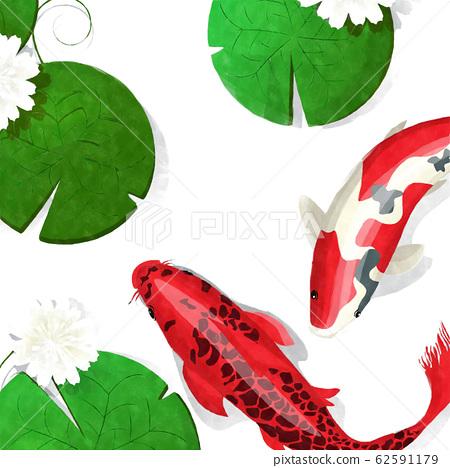 Watercolor koi fish 62591179