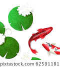 Watercolor koi fish background 62591181