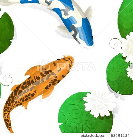 Koi fish and lotus watercolor 62591184