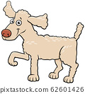 cartoon poodle dog pet animal character 62601426