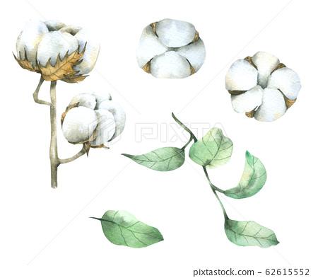 Cotton flower watercolour paint on white background 62615552