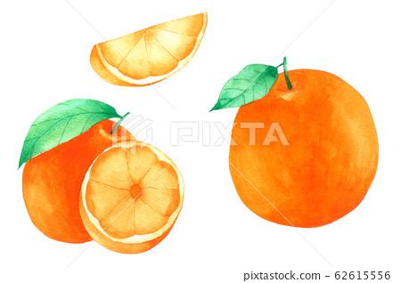 Orange fruit watercolour paint on white background 62615556