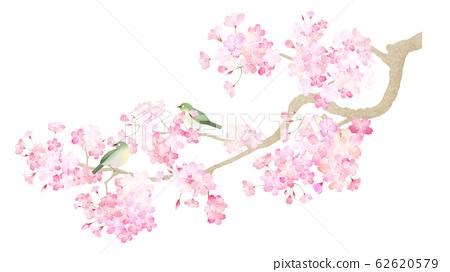 소재 - 부품 - 벚꽃 - 지점 - 동박새 - 봄 - 화 - 일본식 - 일본식 디자인 - 종이 - 일본 62620579