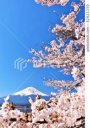 日本的春天富士和櫻花 62621150