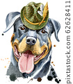 Watercolor portrait of rottweiler with green hat 62628411
