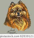 Small Pomeranian vector hand drawing in color 62639121