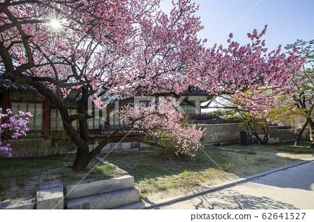紫禁城春天 62641527