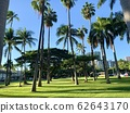[Hawaii] Walking Hawaii Palm Trees and Blue Sky 62643170