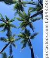 [Hawaii] Palm, sky and Hawaii 62643283