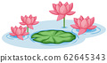 Pink lotus flowers with one green leaf in the pond 62645343