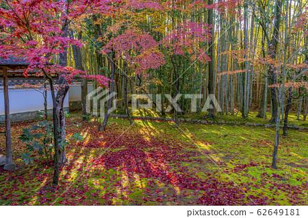 교토 가을의 높은 오동 나무 원 62649181
