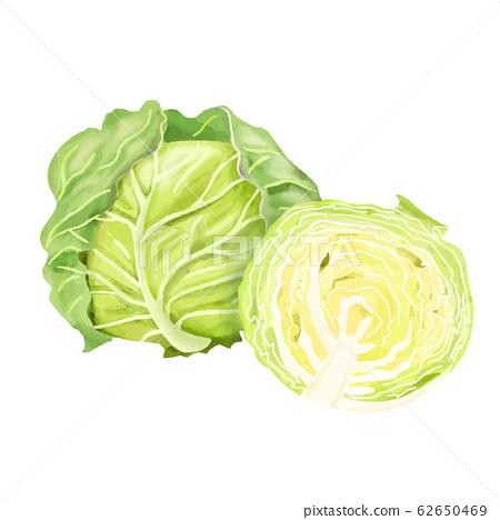 蔬菜白菜水彩畫一半和整個 62650469