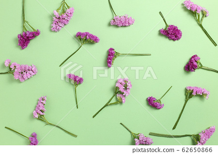 Pink purple statice flowers on green background. Floral composition, flat lay, top view 62650866