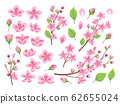 Sakura blossom. Asia cherry, peach flowers. Isolated almond garden or park plants. Pink budding floral petal and branches, leaf vector set 62655024