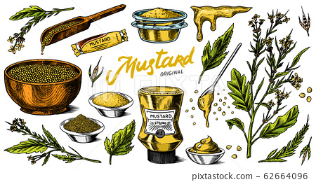 Mustard seeds set. Spicy condiment, seasoning bottle, packaging and leaves, wooden spoons, plant 62664096