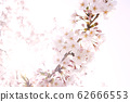 봄 이미지 62666553
