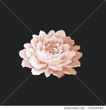 優雅的花卉素材組合 62666680