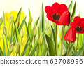 Red tulip in the flower bed 62708956