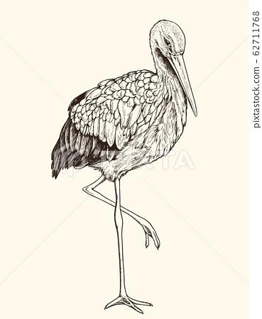 Hand drawn illustration of white stork. 62711768