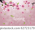 Blossoming light pink sakura flowers 62723179