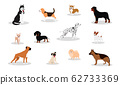 Different dog breeds and mixed set.  62733369