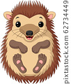 Cartoon cute little hedgehog on white background 62734449